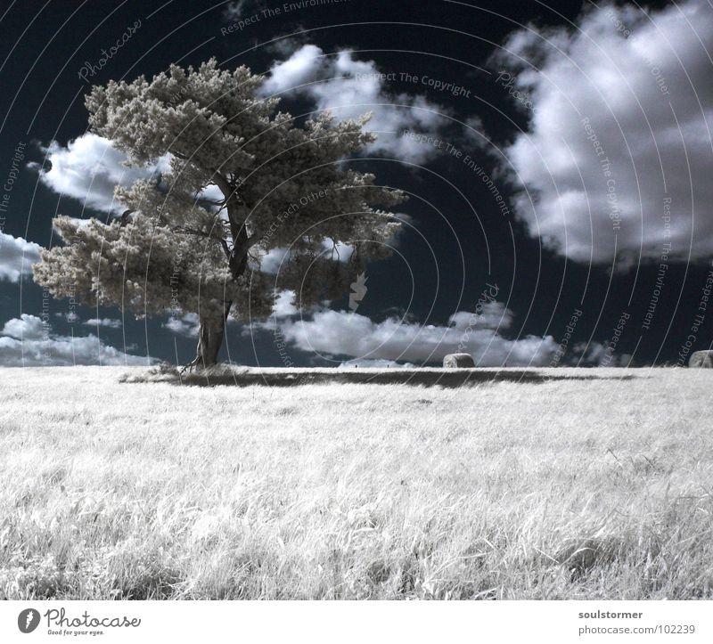 One lonely Tree Infrarotaufnahme Farbinfrarot Schwarzfilter Wolken schwarz weiß Holzmehl Licht Gras Wiese Pflanze grün Baum Waldrand Wäldchen Trauer