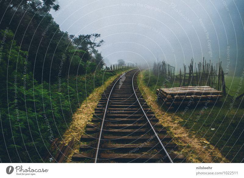 Richtung Nirgendwo Abenteuer Ferne Expedition Sommer Nebel Sträucher Urwald Verkehrswege Bahnfahren Schienenverkehr Eisenbahn Gleise braun grau grün entdecken