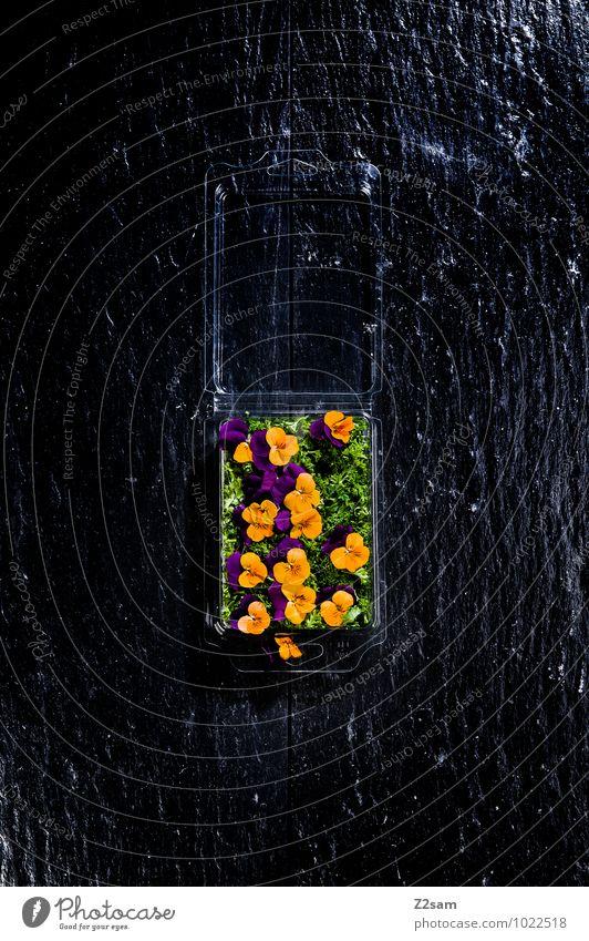 Blumenschmaus Pflanze grün Farbe Blüte natürlich Speise Gesundheit Lebensmittel orange Dekoration & Verzierung ästhetisch Ernährung genießen Kräuter & Gewürze