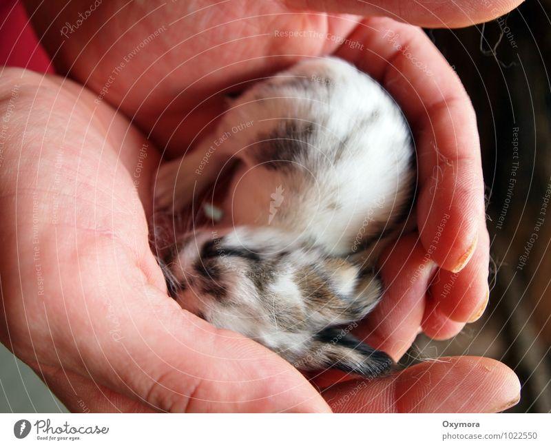 Häschen 1 Mensch weiß Hand Tier schwarz Tierjunges Wärme Liebe braun Zusammensein Finger weich Warmherzigkeit neu Haustier Hase & Kaninchen