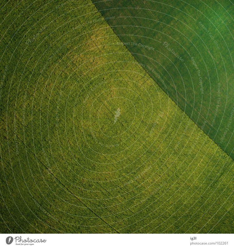 schatzkarte Muster Feld Hintergrundbild diagonal Ackerbau Oberfläche Textfreiraum Grünfläche grasgrün Oberflächenstruktur