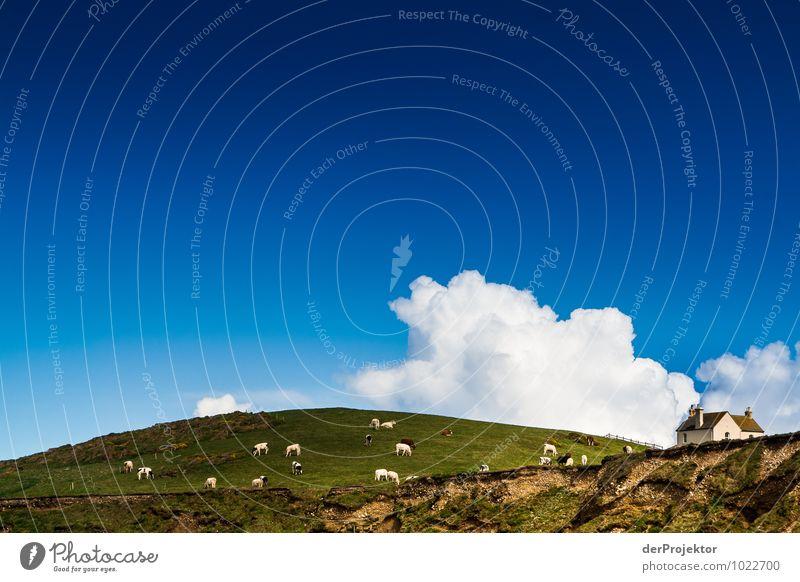 Das könnte auch Werbung für einen Butterhersteller sein Natur Ferien & Urlaub & Reisen Pflanze Landschaft Wolken Tier Umwelt Gefühle Wiese Küste Frühling Feld
