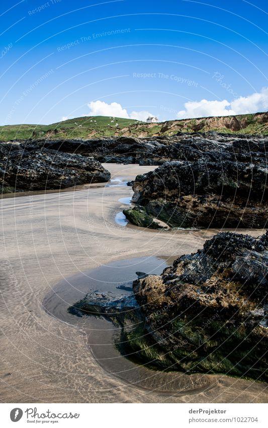 Ebbe am Strand Natur Ferien & Urlaub & Reisen Pflanze Meer Landschaft Freude Tier Umwelt Frühling Gefühle Küste Freiheit Felsen Zufriedenheit Tourismus
