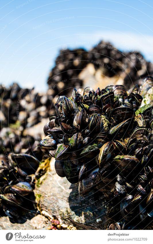 Der Muschelberg ruft Natur Pflanze Landschaft Tier Strand Umwelt Frühling Gefühle Küste Essen außergewöhnlich Felsen authentisch Insel bedrohlich Schönes Wetter