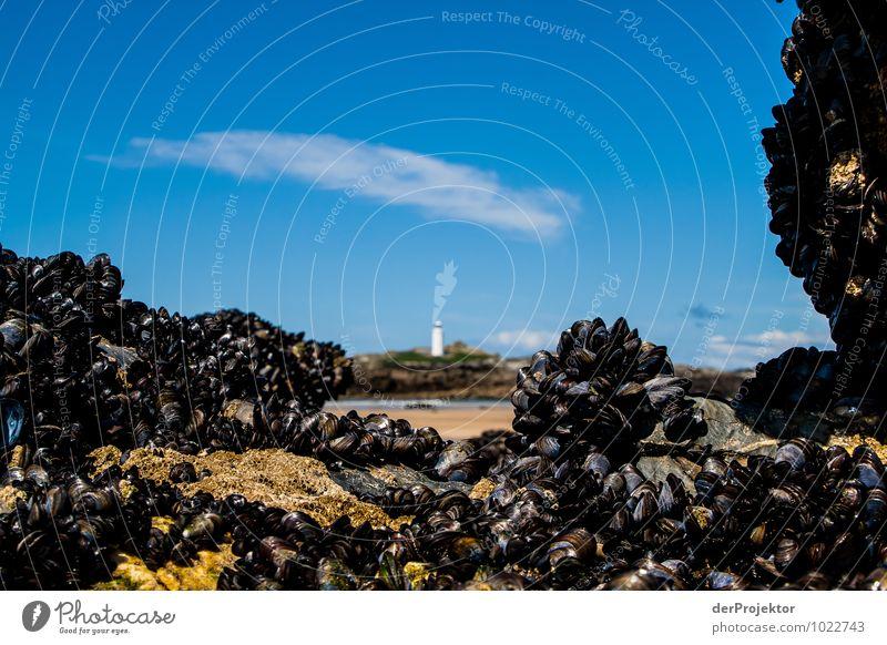 Leuchtturm mit natürlicher Rahmung Ferien & Urlaub & Reisen Tourismus Ausflug Ferne Freiheit Umwelt Natur Landschaft Pflanze Tier Frühling Felsen Wellen Küste
