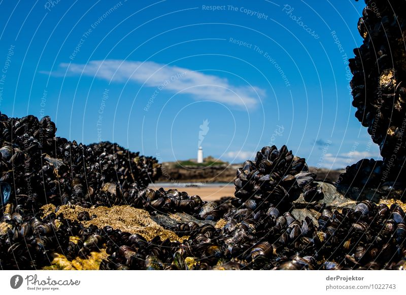 Leuchtturm mit natürlicher Rahmung Natur Ferien & Urlaub & Reisen Pflanze Landschaft Tier Strand Ferne Umwelt Küste Frühling Freiheit Felsen Wellen Wildtier
