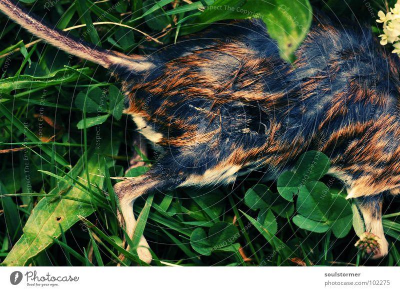 Katzenfutter - im Grünen Pfote Schnauze Ameise Futter Leiche Fell Schwanz Hinterbein bewegungslos Vergänglichkeit Friedhof nass Bäh igitt Ekel Tier klein