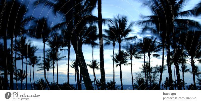 night feat. turtle island Strand Nacht Palme träumen Meer Ferien & Urlaub & Reisen Erholung Ko Tao Brise Pause Freude Asien Wetter Insel Idylle Himmel Wind blau