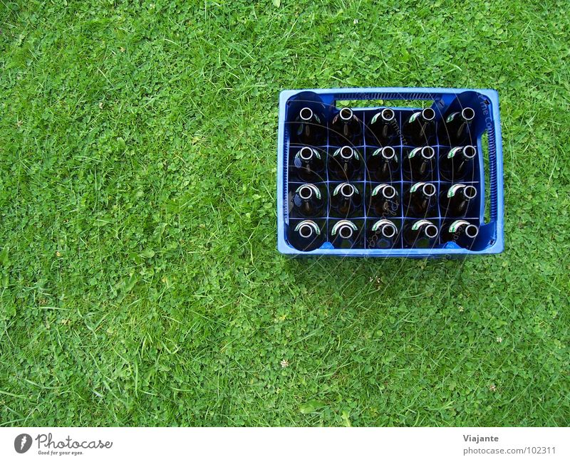 20 leere Hälse. Bier Bierkasten Bierflasche Pfandflasche Erfrischung Wiese Gras grün Alkoholsucht Erfrischungsgetränk Alkoholisiert zuschütten Zeche