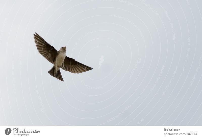 Futter gibts Himmel weiß schwarz Freiheit Glück Vogel braun füttern Treffer Tier Nest Dachgiebel Federvieh Schwalben Vogelkolonie Mehlschwalben