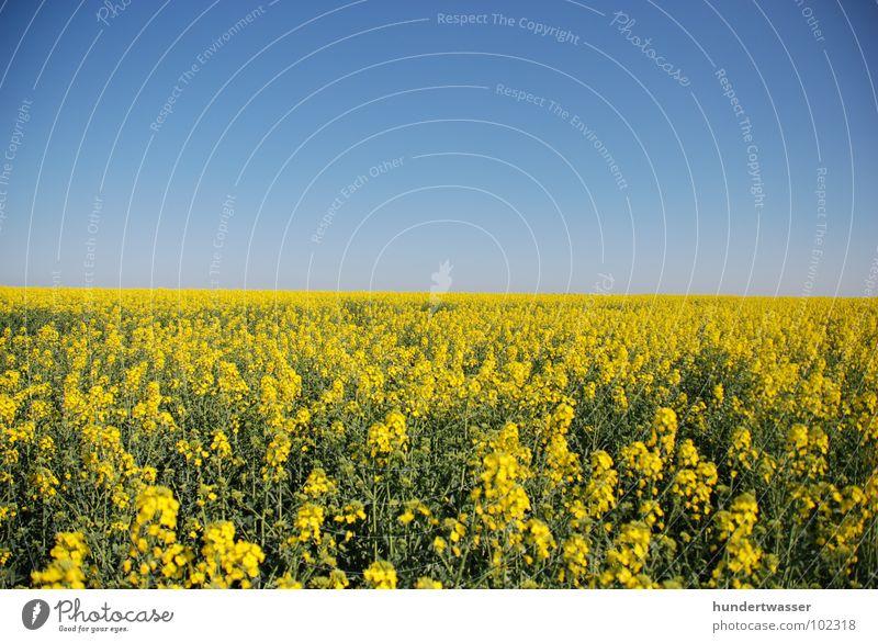 """weite"" Raps Rapsfeld Blume Blüte Hintergrundbild gelb Frühling Sommer Pflanze Wiese Natur lanschaft Himmel"