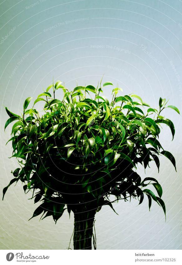 photosynthese 02 Natur Baum grün Pflanze Einsamkeit Beleuchtung Wachstum Sträucher Dekoration & Verzierung Klarheit hart gestellt Entwicklung Moral Erfinden