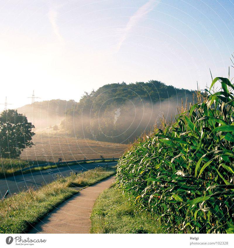 ländliche Landschaft mit Straße, Fahrradweg, Maisfeld und Bäumen mit Nebelschwaden Nebelbank Morgen Feld Wald Baum Blüte Gras grün braun grau weiß Wolken Licht