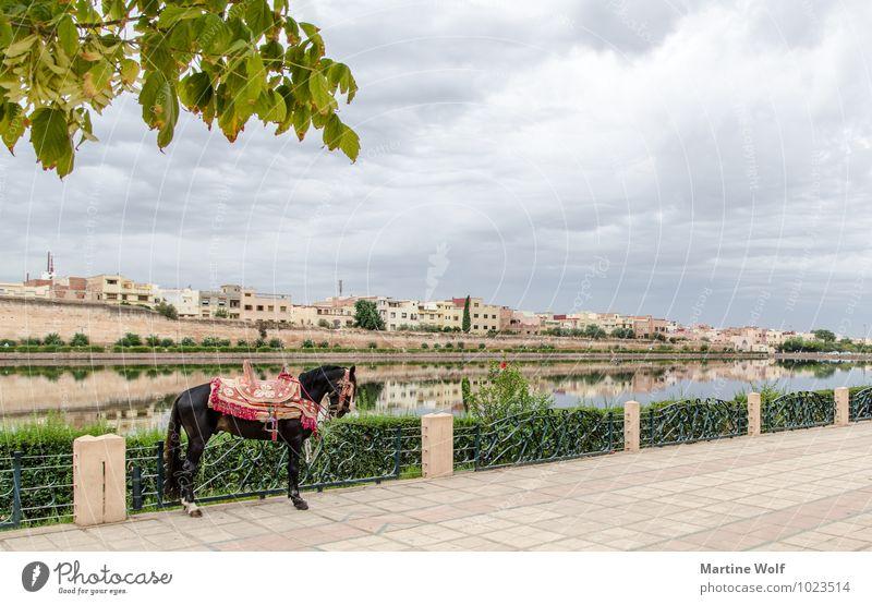Palastebzirk Moulay Ismail Ferien & Urlaub & Reisen Stadt Haus Tier Pferd Afrika Teich Marokko Meknes