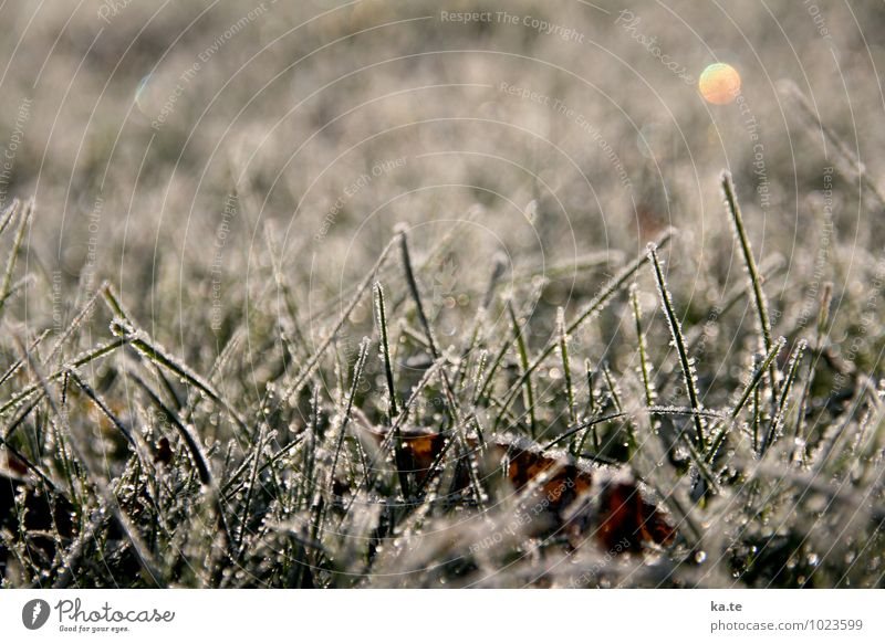 gezuckerter Rasen Natur Pflanze Winter Schönes Wetter Eis Frost Gras Blatt Wiese kalt natürlich grün weiß ruhig Idylle Stimmung Gedeckte Farben Außenaufnahme