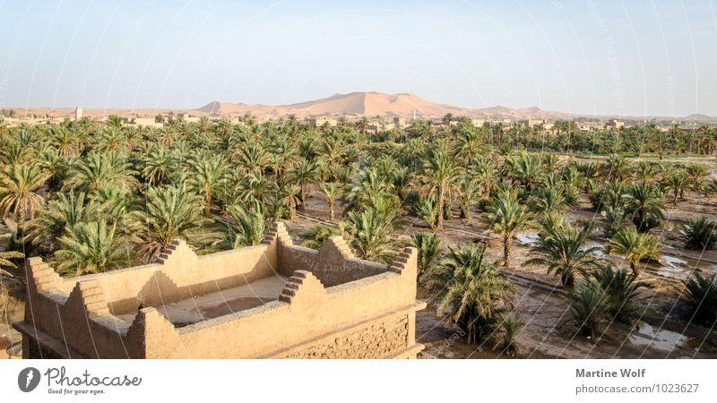 Erg Chebbi Natur Ferien & Urlaub & Reisen Pflanze Landschaft Sand Wüste Afrika Stranddüne Palme Oase Marokko Merzouga