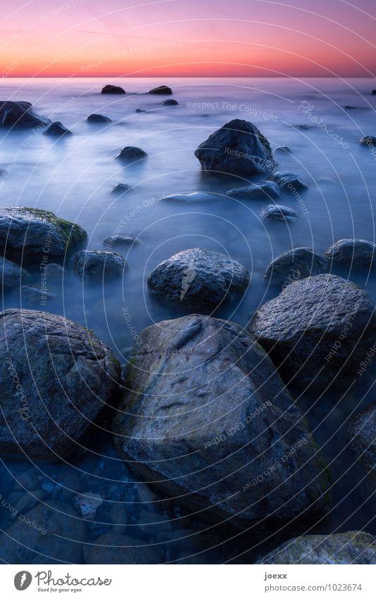 Lebende Steine Himmel blau Wasser Landschaft ruhig schwarz Küste Felsen orange Horizont Idylle groß Schönes Wetter violett Unendlichkeit