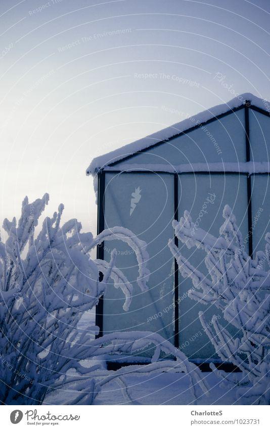 Glashaus Wolkenloser Himmel Winter Eis Frost Schnee Schneefall Pflanze Sträucher Gewächshaus Tropischer Garten Wiese Feld Hütte Fassade Dach Stahl Rost Tropfen