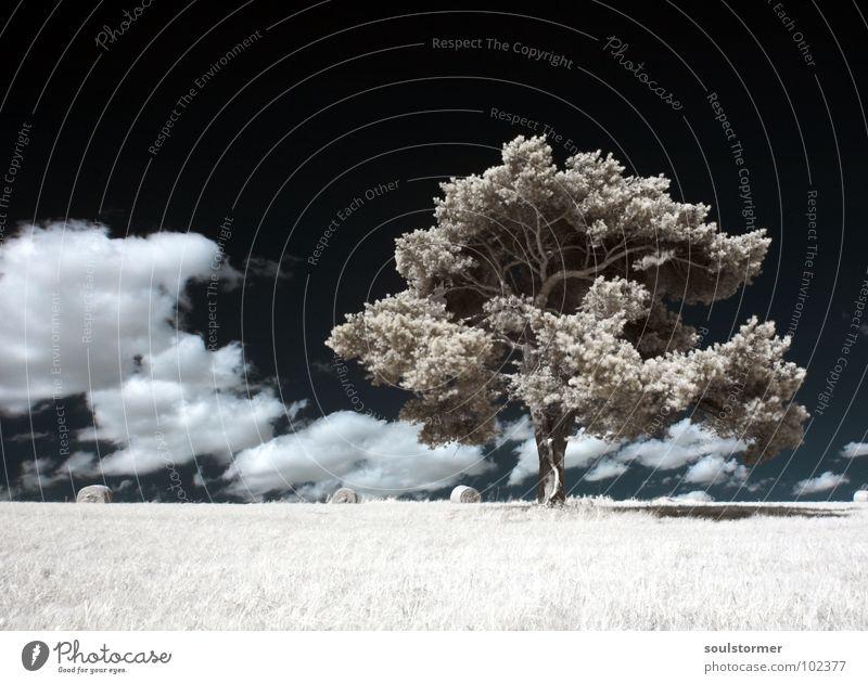 Ganz alleine Himmel blau weiß grün Baum Pflanze Wolken schwarz Wiese Gras Holz Trauer Rasen Verzweiflung Schwarzweißfoto Filter