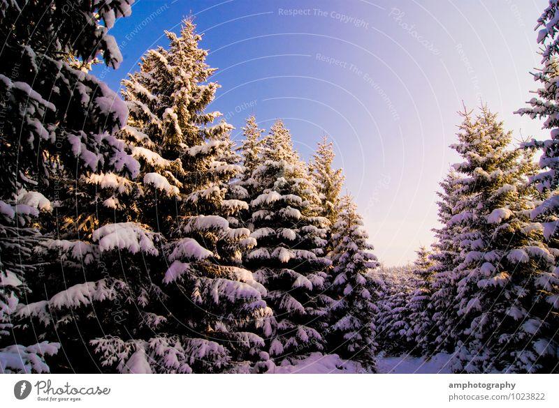 Winterwald Himmel Natur blau weiß Baum Erholung Einsamkeit Landschaft Freude Tier Wald kalt Berge u. Gebirge Umwelt Schnee