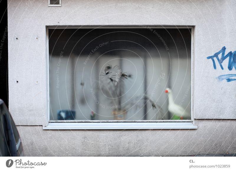 schaufenster Häusliches Leben Wohnung Haus Dekoration & Verzierung Pflanze Topfpflanze Stadt Mauer Wand Fenster Straße Tier Gans 1 Kitsch Krimskrams Graffiti
