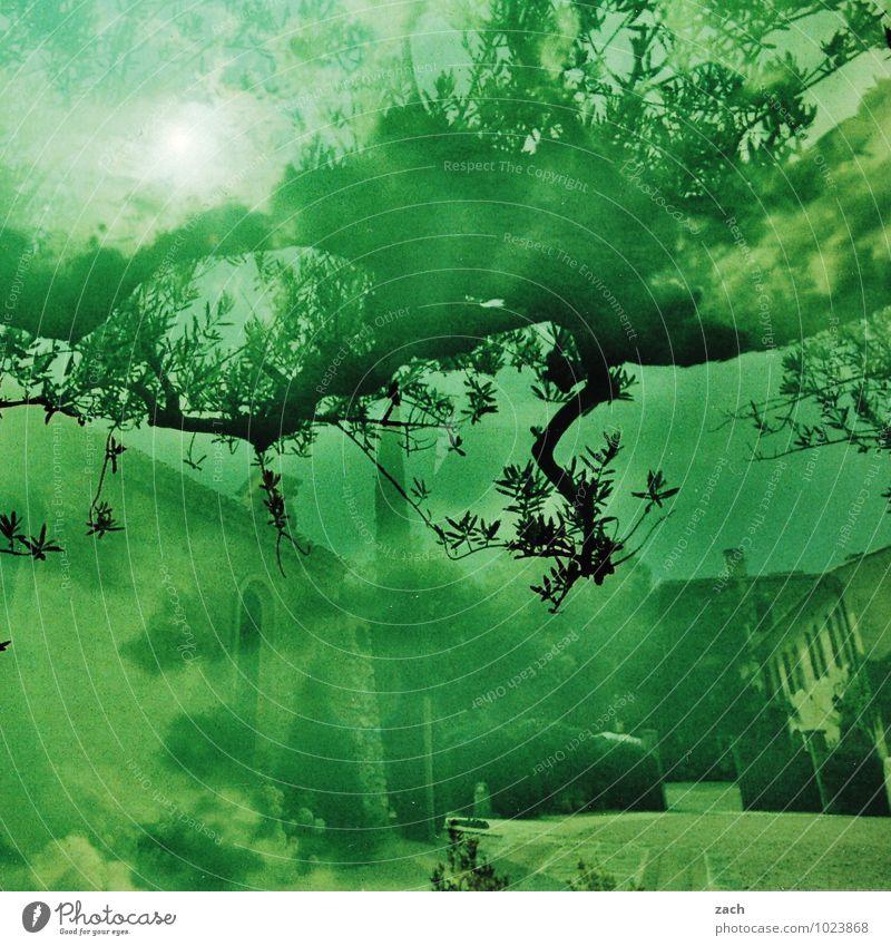 Fehler in irgendeinem Kontinuum Pflanze grün Sommer Sonne Baum Haus Fenster Wand Mauer Garten Park Häusliches Leben Tür Sträucher Schönes Wetter Dorf
