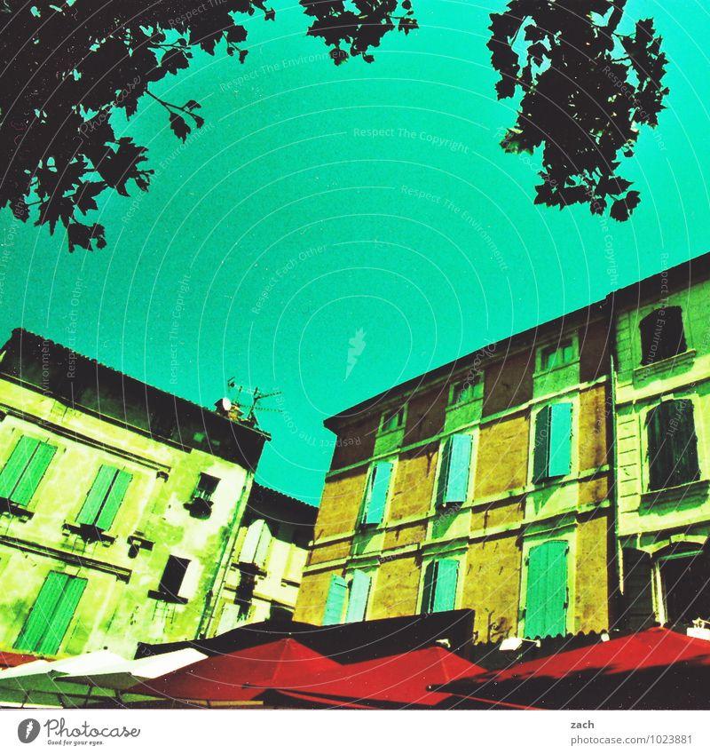 Avignon Ferien & Urlaub & Reisen Pflanze Baum Frankreich Provence Dorf Kleinstadt Altstadt Haus Platz Bauwerk Architektur Mauer Wand Fassade Fenster
