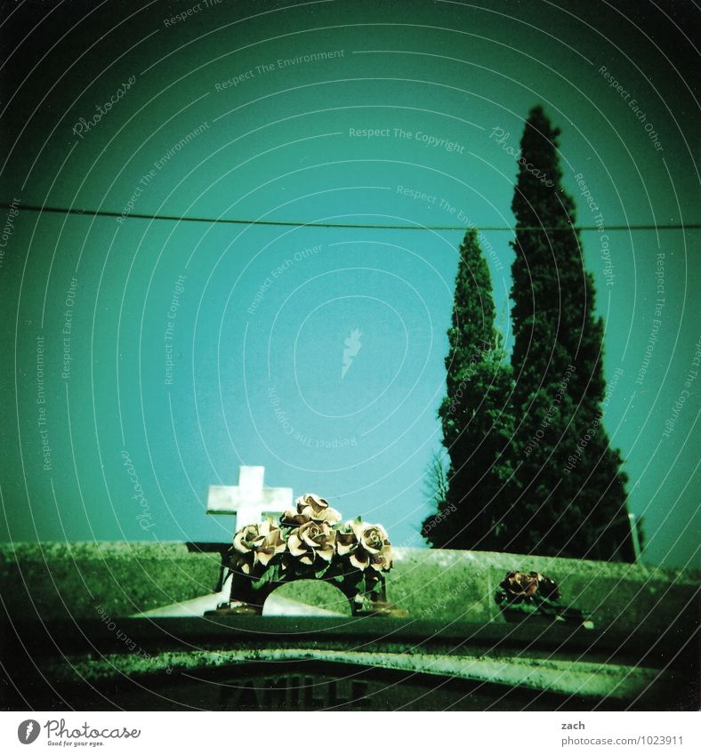 letzte Reise Trauerfeier Beerdigung Schönes Wetter Pflanze Baum Park Friedhof Grab Gruft Zeichen Schriftzeichen Kreuz Traurigkeit retro grün Tod Senior Ende