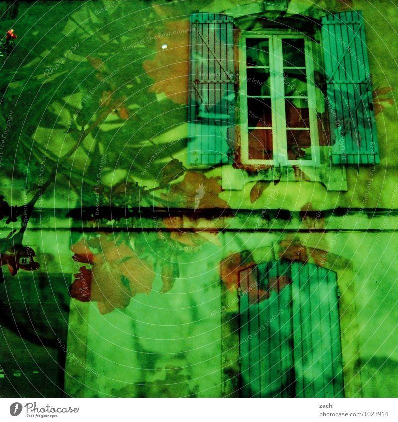 Kletterrosen Traumhaus Pflanze Baum Rose Blatt Blüte Grünpflanze Frankreich Dorf Kleinstadt Altstadt Haus Bauwerk Gebäude Mauer Wand Fassade Fenster Blühend