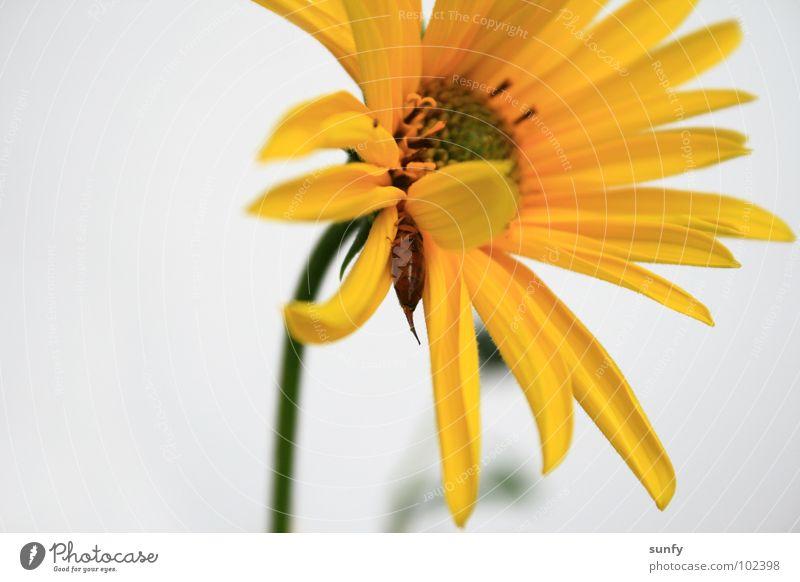 Versteckspiel Sommer Tier gelb Blüte frisch Versteck sommerlich
