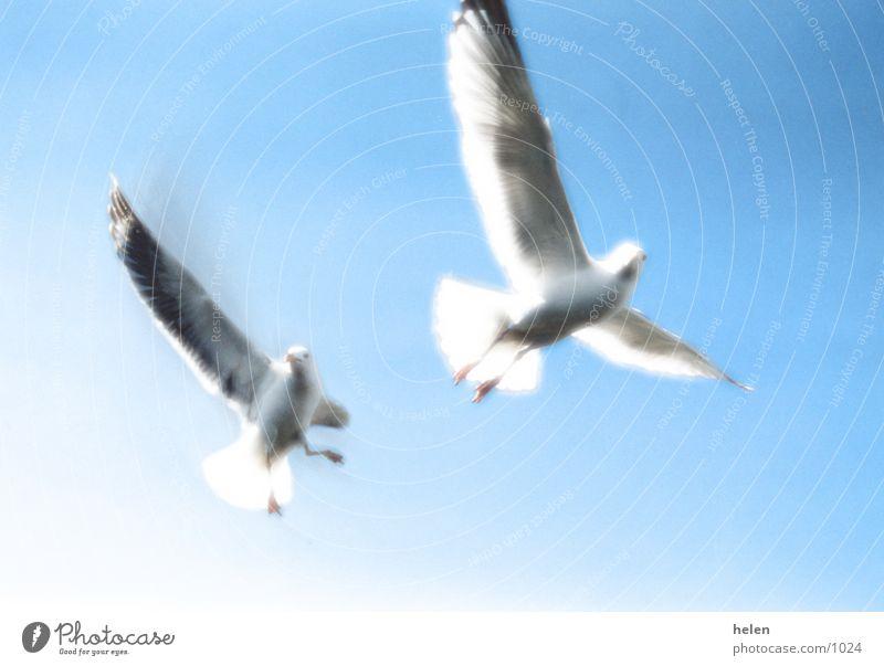 freiheit Meer mšwe Himmel Natur Freiheit
