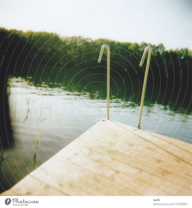 der Geruch von Sommer Schwimmen & Baden Ferien & Urlaub & Reisen Sommerurlaub Sonnenbad Wassersport Schwimmbad Pflanze Baum Wald Seeufer Flussufer Teich