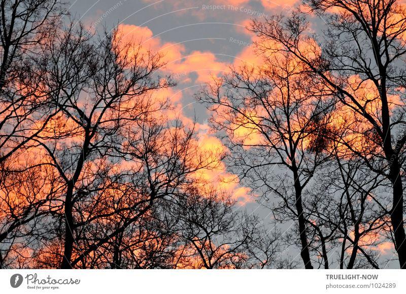 Neuer Morgen Himmel Natur blau schön Baum Landschaft Wolken Winter schwarz Umwelt gelb natürlich außergewöhnlich glänzend Park Luft