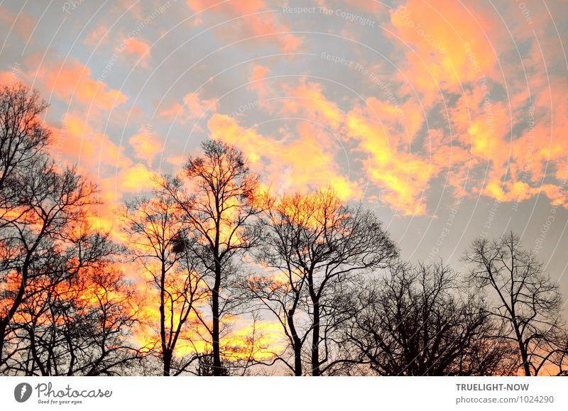 Neuer Morgen 2 Himmel Natur Pflanze Baum Landschaft Wolken Winter Wald schwarz Umwelt gelb Gefühle Glück Horizont orange Park