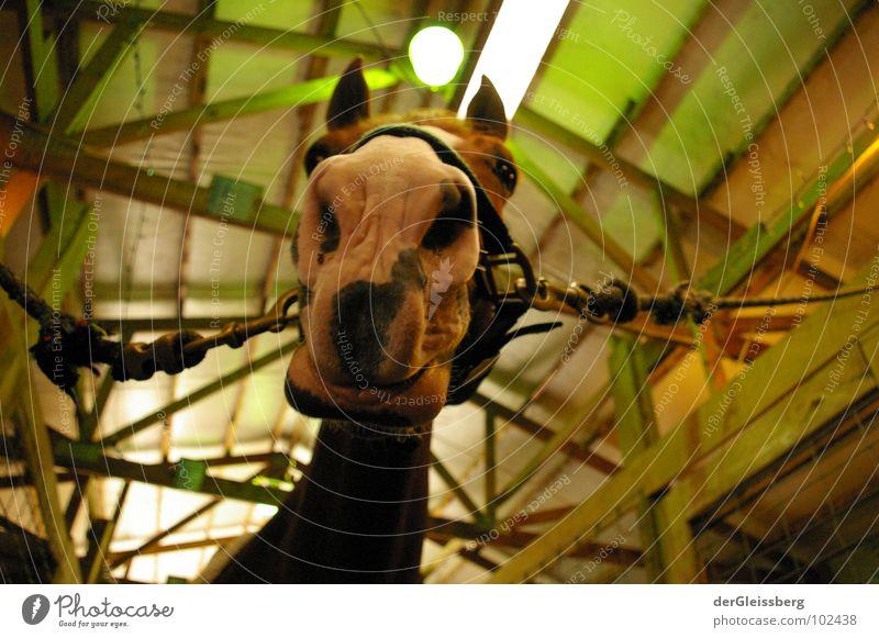 moin! Pferd Schnauze Tier grün Neugier Licht Holz angekettet Säugetier Nase Ohr Hals Blick Geruch Leben hell Seil