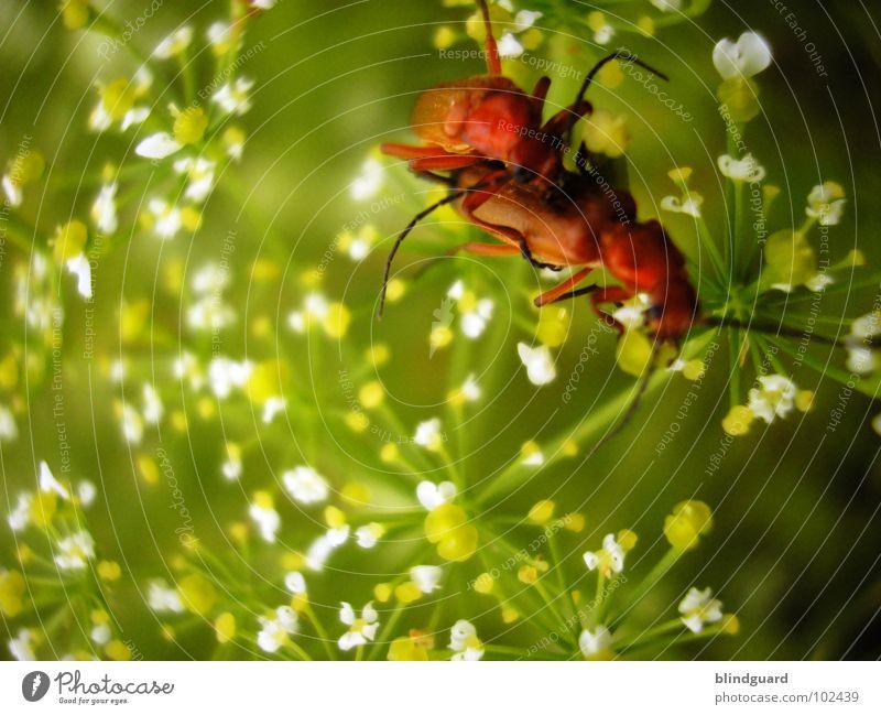 It's A Bug Porno Natur grün weiß rot Pflanze Blume Tier Gras Blüte Frühling orange Zufriedenheit Zusammensein sitzen offen Tierpaar