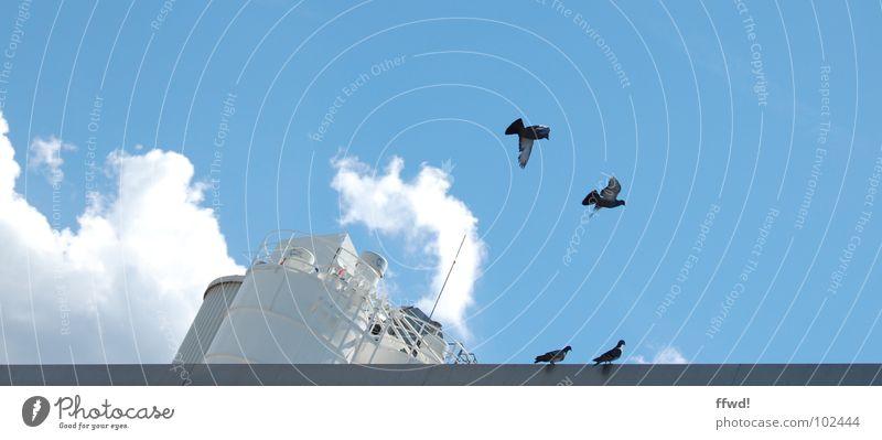 Taubenschlag Himmel blau Sommer Wolken Vogel Nebel fliegen Industrie Luftverkehr Flügel Abgas Taube Wasserdampf Tier Silo flattern