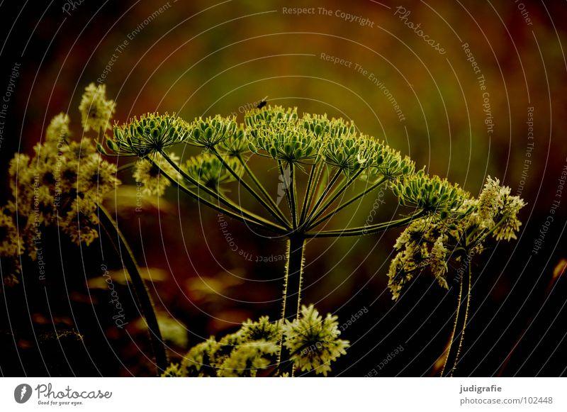 Wiese Natur schön weiß Blume Pflanze Sommer schwarz Farbe Wiese Blüte braun Umwelt Wachstum einfach Stengel Wildtier