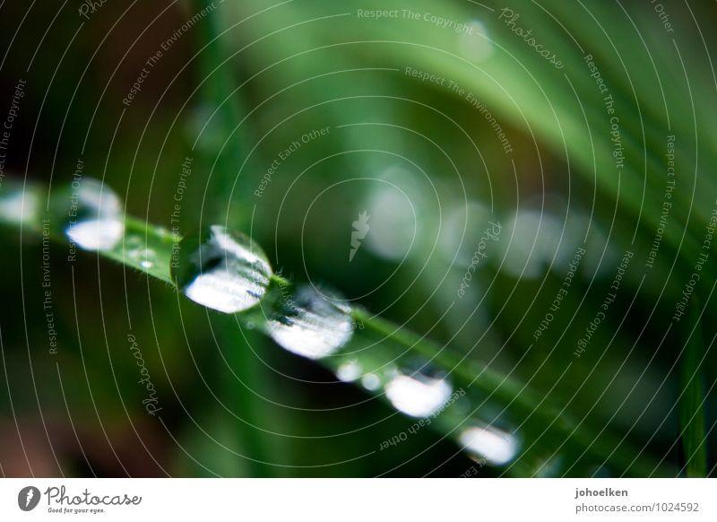 Eine 5,4 auf der Tröpfchenskala Umwelt Pflanze Urelemente Wasser Wassertropfen Schönes Wetter schlechtes Wetter Regen Gras Blatt Garten Park Wiese Spiegel