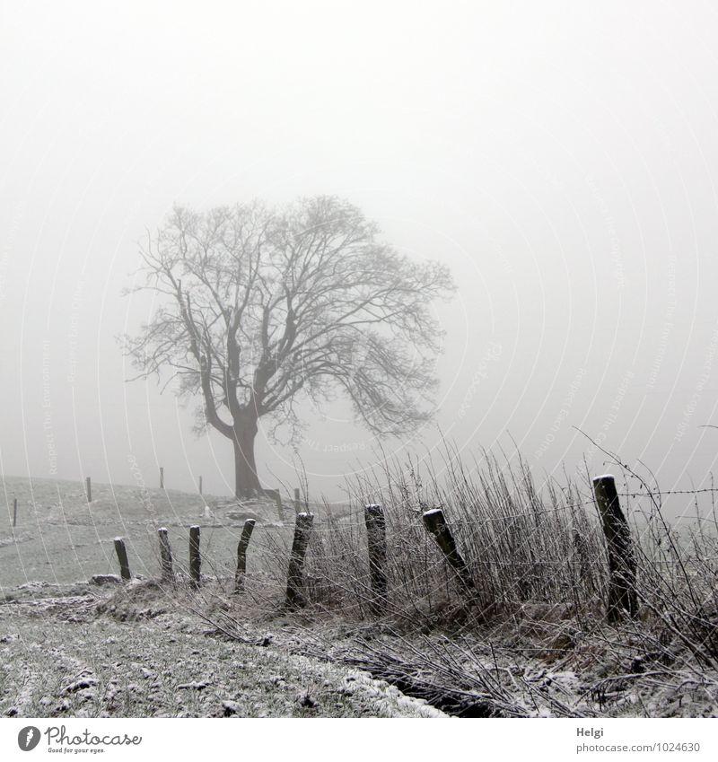 Dezembernebel Umwelt Natur Landschaft Pflanze Winter Nebel Eis Frost Schnee Baum Gras Feld Zaun Zaunpfahl Holz stehen authentisch einfach einzigartig kalt
