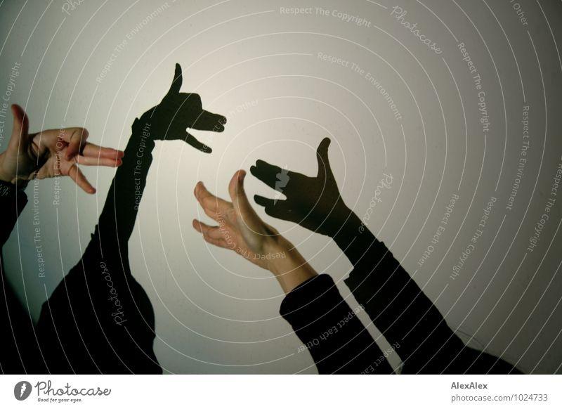 Hunde die Schatten werfen, beißen nicht Hand Haustier Schattenspiel Kaspertheater Theaterschauspiel Tierfigur beobachten Kommunizieren Spielen ästhetisch