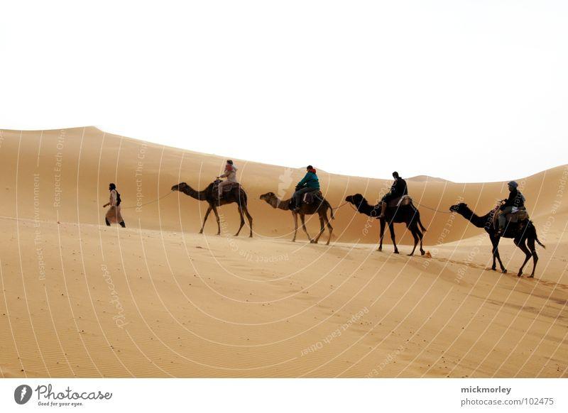 lords of the sand heiß Physik wandern Abenteuer Kamel Dromedar Fátima Ferien & Urlaub & Reisen Marokko Afrika gelb Erde Sand Wüste Wärme Zigarettenmarke