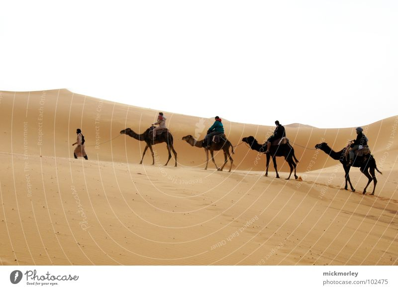 lords of the sand Sonne Ferien & Urlaub & Reisen gelb Sand Wärme Erde wandern Abenteuer Physik Wüste heiß Afrika Stranddüne Kamel Marokko
