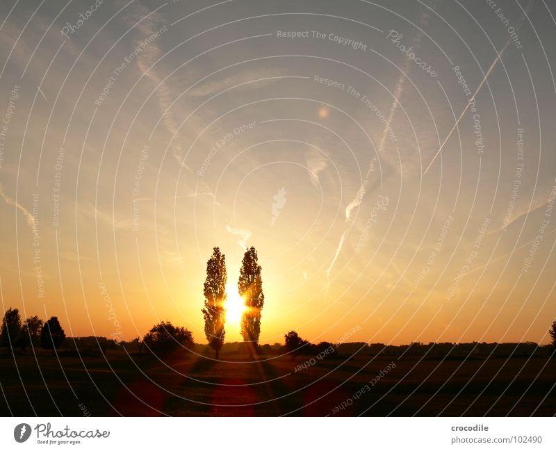 zwillinge im sonnenuntergang Himmel Baum Sommer Wolken Wiese Freiheit 2 Zusammensein Streifen Unendlichkeit Zwilling