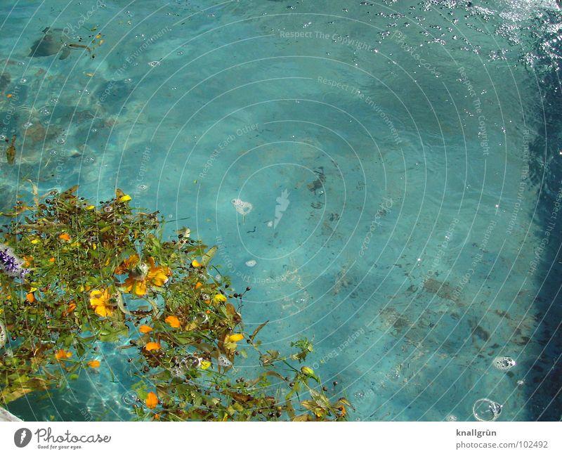 Vor der Reinigung Wasser blau Sommer Blatt Blüte nass Schwimmbad Reinigen türkis Luftblase Wasseroberfläche