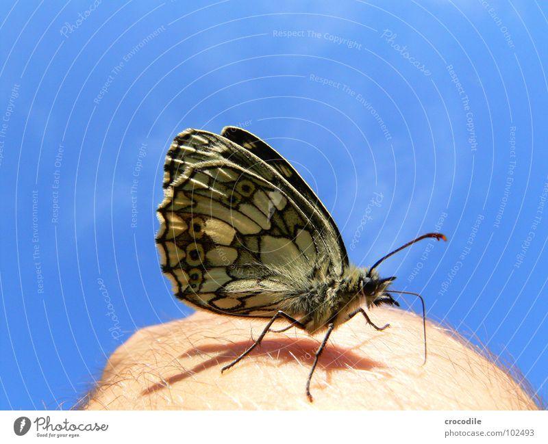 verliebter schmetterling Hand schön Himmel Sonne blau Sommer Tier Freiheit Beine Haut fliegen Flügel Insekt Fell Schmetterling