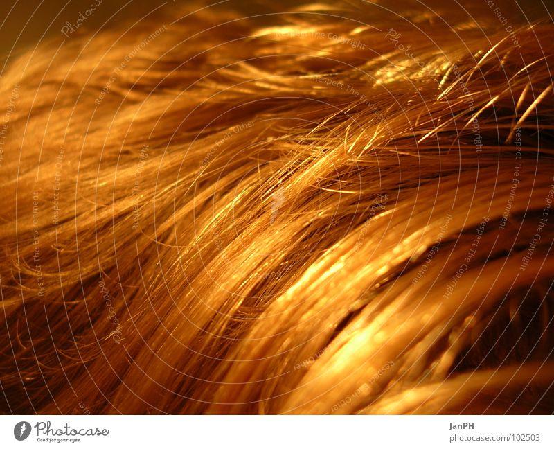 Ein Feld..., oder doch nicht?!? Haare & Frisuren Kopf blond Weizen
