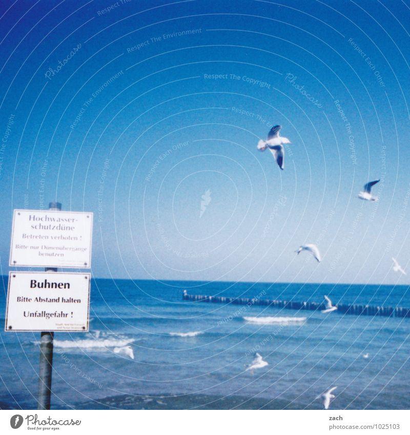 Wasserzeichen l gute Aussichten Sommer Strand Meer Wellen Natur Wolkenloser Himmel Küste Ostsee Tier Vogel Flügel Möwe Tiergruppe Schilder & Markierungen