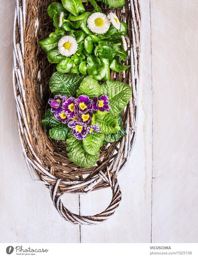Frühlingsblumen in weisem Korb Natur Pflanze weiß Sommer Blume Blatt gelb Innenarchitektur Stil Holz Hintergrundbild Garten rosa Design Dekoration & Verzierung