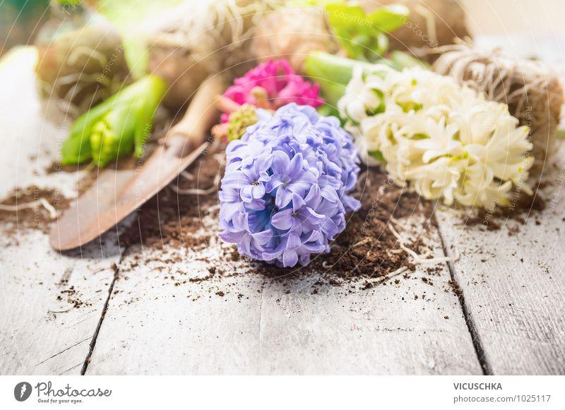 Hyazinthe und Schaufel auf weißem Holztisch Stil Design Freizeit & Hobby Sommer Garten Dekoration & Verzierung Natur Pflanze Frühling Blume white